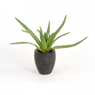 Silk Greenery Aloe Desk Top Plant in Pot