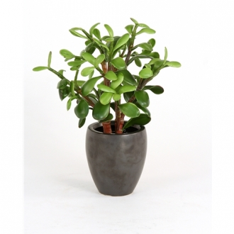 Silk Greenery Jade Desk Top Plant in Pot