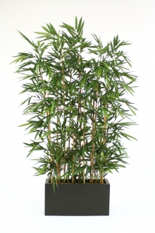 Bamboo Grove Tree in Divider