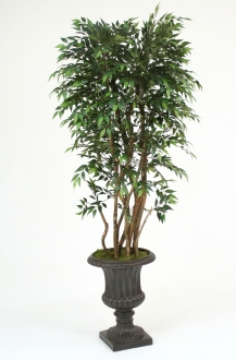 Ruscus Tree in Urn