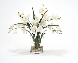 Waterlook (R) Cream Phalaenopsis Orchids And Foliage In Narrow Oval Glass Vase
