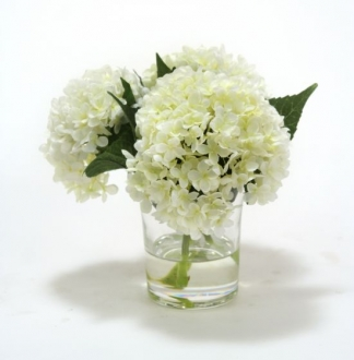 Waterlook (R) White Hydrangeas in Glass Cylinder