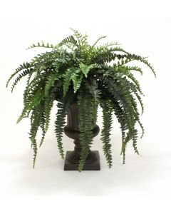 Boston Fern in Large Classic Urn