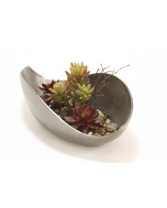 Burgundy Hen and Chicken and Succulents in Cosmic Curved Tray
