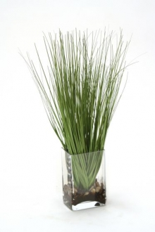 Waterlook (R) Grass in Rectangular Glass