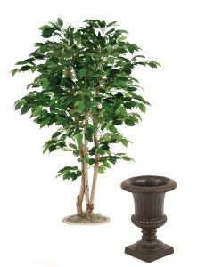 5' Green Ficus Tree in 15 Rust Classic Fiberglas Urn