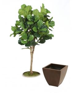 6' Fiddle Leaf Fig Tree in Bronze Metal Contempo Planter