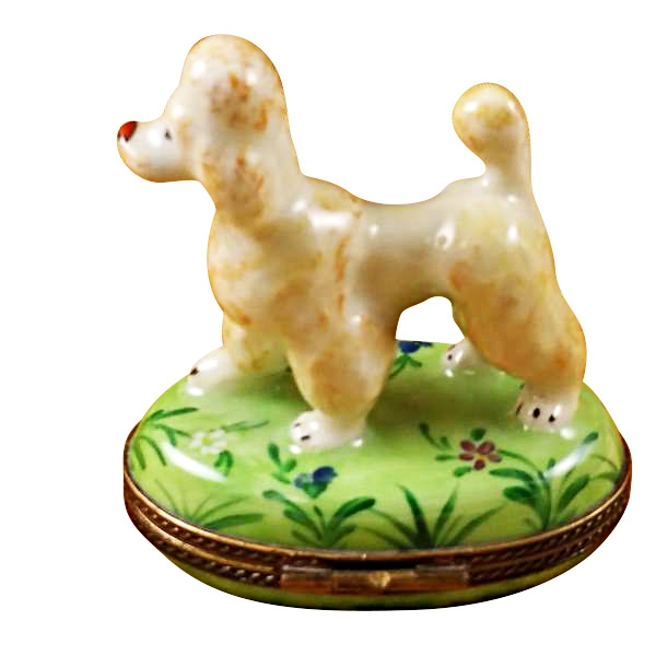 APRICOT POODLE ON GREEN BASE