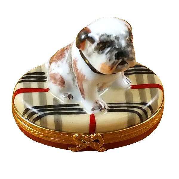 Bulldog on plaid rug