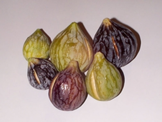 Marble figs various sizes