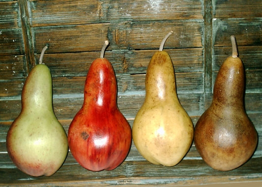 Large Gourd Pears