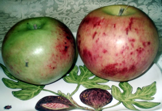Mackintosh Apples